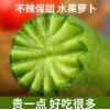 水果萝卜甜脆水果型9斤沙窝天津潍坊潍县新鲜正宗生吃5青皮绿萝卜