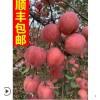 烟台红富士苹果水果10十脆甜斤山东栖霞一级带箱新鲜当季整箱平果