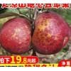 大凉山盐源冰糖心丑苹果新鲜水果10斤脆甜野生大苹果红富士5包邮
